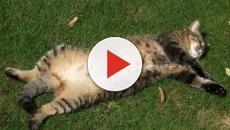 6 chats qui dorment au soleil.