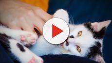 Quelques idées reçues en rapport avec les chats