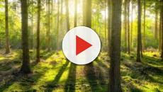 Le dilemme écologique : les besoins économiques et ses problèmes