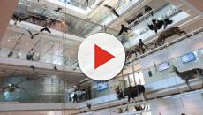 Trento: dall'evoluzione alla sostenibilità, le diverse sezioni del Museo
