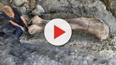 El fémur de dinosaurio más grande hallado hasta la fecha, aparece en Francia