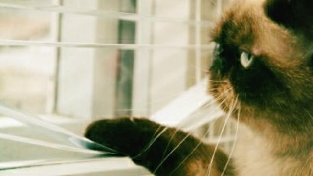 Animaux : 5 erreurs que font les maîtres avec leur chat selon les vétérinaires
