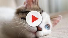 Beneficios de tener un gato para la salud
