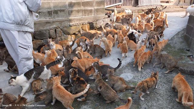 Tourism on Cat Island, Japan hit by reduction in cat population