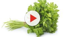 Seis alimentos con alto contenido de Hierro