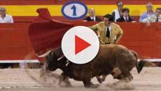En la plaza de toros de Mallorca suena 'Cara al sol' el himno falangista
