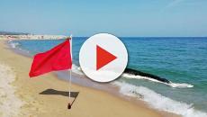 En la playa de Mataró ha aparecido una ballena muerta