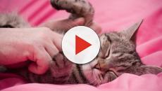 Cohabitation entre chat et enfant, ce qu'il faut savoir