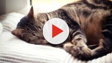 5 choses à savoir sur le sommeil de son chat