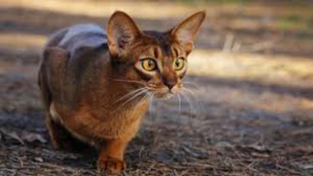 Les photos de chats sur les réseaux sociaux seraient dangereuses