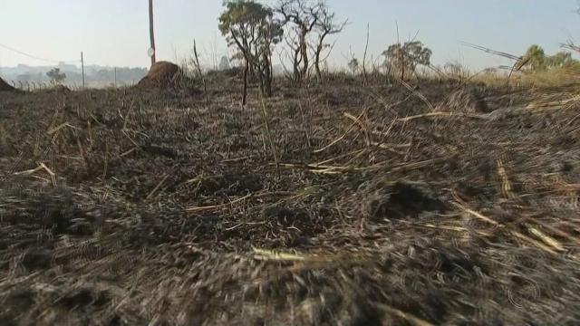 Queimadas têm aumentado em todo estado de Rondônia