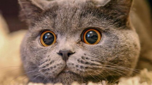 Les 6 excuses bidons de maîtres qui ont abandonné leur chat