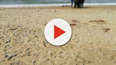 Orrore ad Albarella: resti umani sulla spiaggia