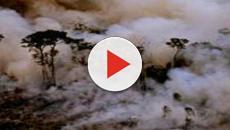 Incendi in Siberia e Amazzonia, le temperature della Terra rischiano di salire di 4 gradi