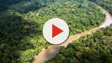Incendio Amazzonia, lo scienziato Ricardo Galvão contro Bolsonaro: 'Non possiamo tacere'
