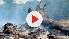 Presidente Jair Bolsonaro autoriza Forças Armadas na Amazônia para combater incêndios