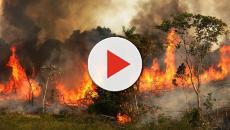 El incendio en el Amazonas podría acabar con miles de especies y tribus