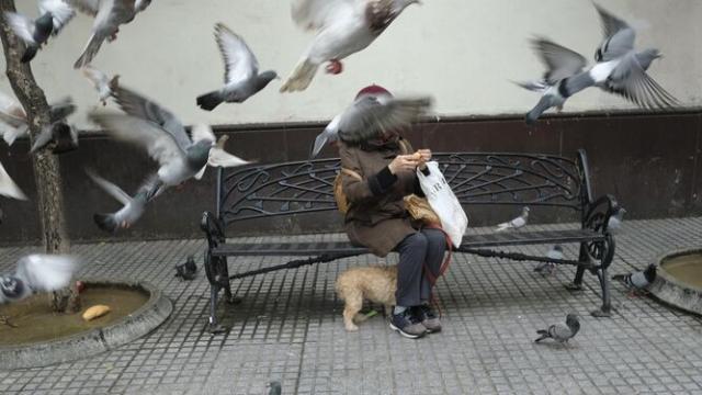 Una vecina de Getafe es denunciada por dar de comer a una plaga de palomas