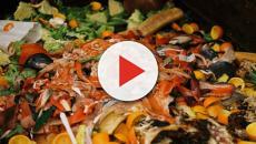 El planeta resultará dañado por culpa del desperdicio de comida