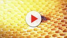 Le molte proprietà benefiche del propoli, derivata del miele