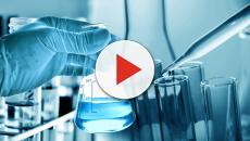 Pele humana substitui uso de animais em experiências laboratoriais
