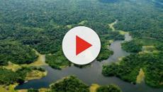 Integrantes da Amazônia Legal buscam retomar investimentos