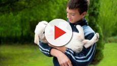 Apuestan por una asignatura de protección animal en un colegio de Granada