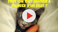 La liste de 6 aliments toxiques pour un chat