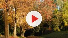 L'autunno comincia oggi, 23 settembre: ce lo dice la scienza