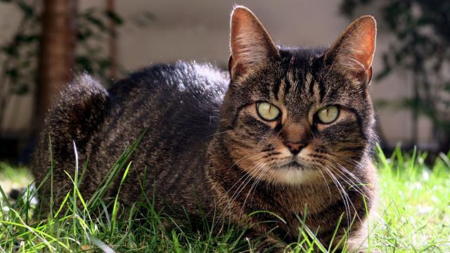 Quelques signes qui montrent qu'un chat a peur de son maître
