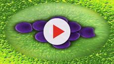 Descubren un fármaco anticoagulante capaz de frenar el alzheimer en los ratones