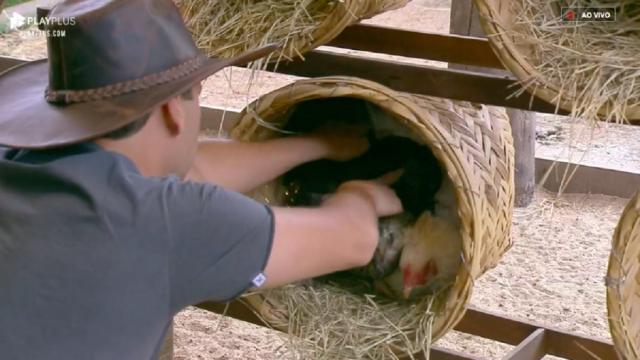 'A Fazenda': Viny quebra promessa e decide ajudar Tati a cuidar das galinhas