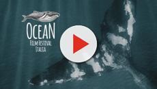 Ocean Film Festival, la rassegna dedicata al fragile ambiente marino al via il 14 ottobre