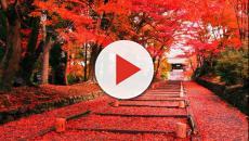 Giappone: l'autunno è la fase migliore dell'anno per ammirare il Momijigari