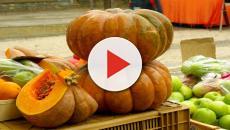 Ricette, stagione autunnale: zucche alla contadina e zucche alla menta