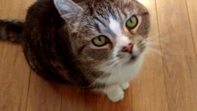 Les 5 comportements étranges de chats expliqués