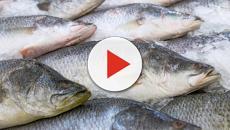 Sanidad advierte que niños menores de 10 años y embarazadas no deben comer atún rojo