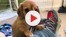Mississipi: cane con mutazione genetica salvato da un'associazione di volontari