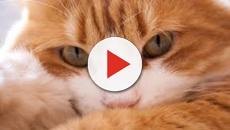 Les raisons pour lesquelles le chat dort avec son maître