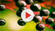 'Bacche, superfrutti e piante miracolose' è il nuovo libro di Renato Bruni
