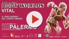 Body Worlds, la mostra sul mondo del corpo umano sbarca a Palermo