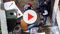 Macelleria abusiva in cortile a Milano: sezionano animale tra i rifiuti