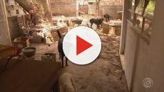 Casal que cuidava de 80 animais abandonados morre no mesmo fim de semana