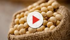 Cinco semillas con propiedades beneficiosas para el cuerpo