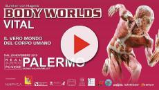 Palermo, inaugurata la mostra sul corpo umano 'Body Worlds Vital'