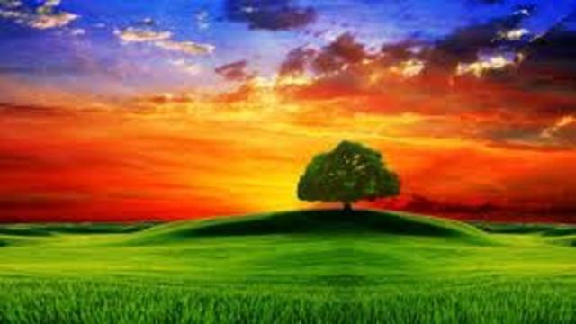Votez pour le plus bel arbre de France