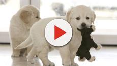 Primera condena en España por la muerte de decenas de cachorros a una tienda de animales