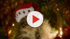 Les 5 conseils pour faire un sapin de noël quand vous avez un chat
