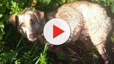 Un cazador de Chantada denunciado por arrastrar y matar a su perra