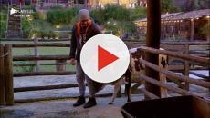 'A Fazenda 11': animais 'trollam' peões e viram estrelas do programa